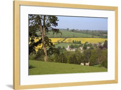 Oilseed Rape Fields and Sheep Above Cotswold Village, Guiting Power, Cotswolds-Stuart Black-Framed Photographic Print