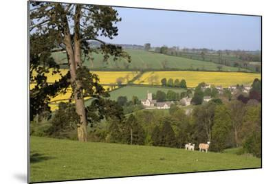 Oilseed Rape Fields and Sheep Above Cotswold Village, Guiting Power, Cotswolds-Stuart Black-Mounted Photographic Print