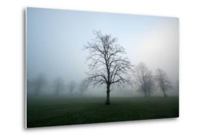 Misty Dawn, Victoria Park, Bristol, England, United Kingdom, Europe-Bill Ward-Metal Print