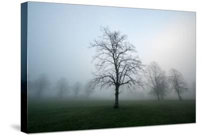 Misty Dawn, Victoria Park, Bristol, England, United Kingdom, Europe-Bill Ward-Stretched Canvas Print