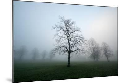 Misty Dawn, Victoria Park, Bristol, England, United Kingdom, Europe-Bill Ward-Mounted Photographic Print