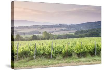 Vineyards Near to Montefalco, Umbria, Italy, Europe-Julian Elliott-Stretched Canvas Print
