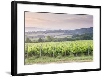 Vineyards Near to Montefalco, Umbria, Italy, Europe-Julian Elliott-Framed Photographic Print