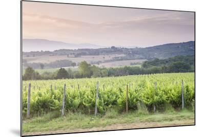 Vineyards Near to Montefalco, Umbria, Italy, Europe-Julian Elliott-Mounted Photographic Print