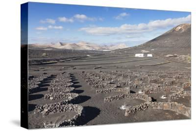 Wine Growing District La Geria, Lanzarote, Canary Islands, Spain, Atlantic, Europe-Markus Lange-Stretched Canvas Print