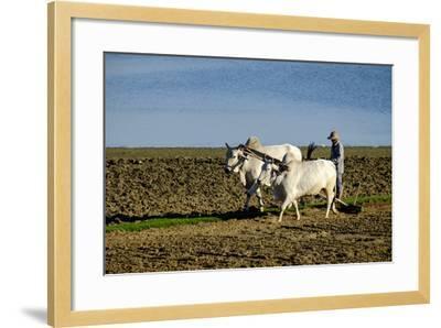 Farmer Ploughing His Field around Taungthman Lake, U Bein, Amarapura, Myanmar (Burma), Asia-Nathalie Cuvelier-Framed Photographic Print