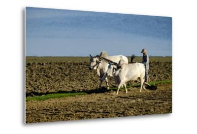 Farmer Ploughing His Field around Taungthman Lake, U Bein, Amarapura, Myanmar (Burma), Asia-Nathalie Cuvelier-Metal Print