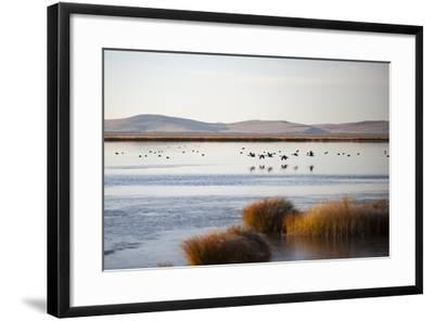Huahu (Flower Lake), an Important Sanctuary for Birds, Sichuan, China, Asia-Alex Treadway-Framed Photographic Print