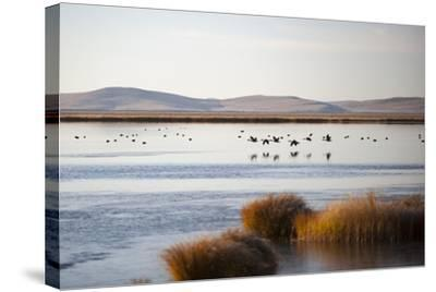 Huahu (Flower Lake), an Important Sanctuary for Birds, Sichuan, China, Asia-Alex Treadway-Stretched Canvas Print