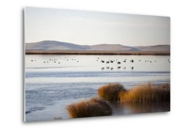 Huahu (Flower Lake), an Important Sanctuary for Birds, Sichuan, China, Asia-Alex Treadway-Metal Print