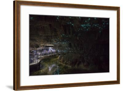 Glow Worms in Waitomo Caves, Waikato Region, North Island, New Zealand, Pacific-Matthew Williams-Ellis-Framed Photographic Print