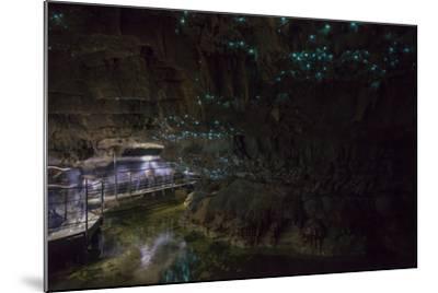 Glow Worms in Waitomo Caves, Waikato Region, North Island, New Zealand, Pacific-Matthew Williams-Ellis-Mounted Photographic Print