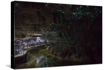 Glow Worms in Waitomo Caves, Waikato Region, North Island, New Zealand, Pacific-Matthew Williams-Ellis-Stretched Canvas Print