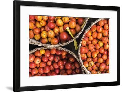 Tomatoes at Hpa an Morning Market, Kayin State (Karen State), Myanmar (Burma), Asia-Matthew Williams-Ellis-Framed Photographic Print
