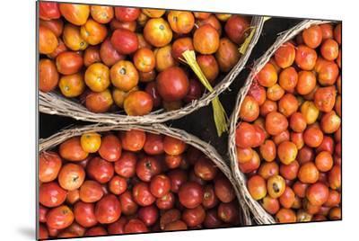 Tomatoes at Hpa an Morning Market, Kayin State (Karen State), Myanmar (Burma), Asia-Matthew Williams-Ellis-Mounted Photographic Print