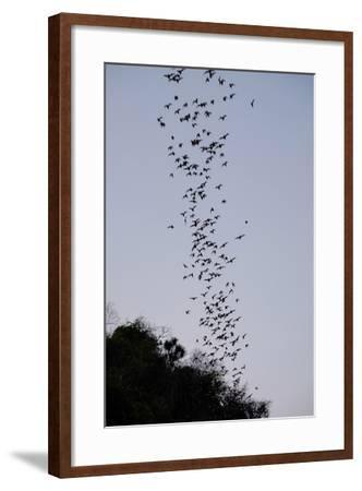 Bats Cave, Battambang, Battambang Province, Cambodia, Indochina, Southeast Asia, Asia-Nathalie Cuvelier-Framed Photographic Print