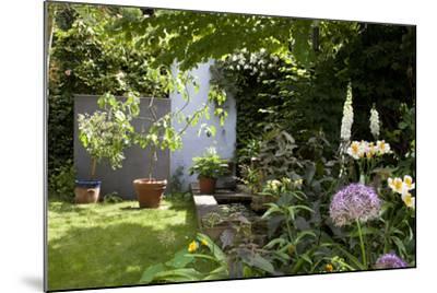 Suburban Garden Detail, Kingston Upon Thames, England, UK-Richard Bryant-Mounted Photo