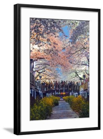 Asia, Republic of Korea, South Korea, Jinhei, Spring Cherry Blossom Festival-Christian Kober-Framed Photographic Print