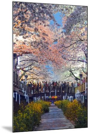 Asia, Republic of Korea, South Korea, Jinhei, Spring Cherry Blossom Festival-Christian Kober-Mounted Photographic Print