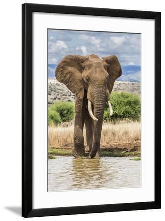 Kenya, Meru County, Lewa Conservancy. a Bull Elephant at a Waterhole.-Nigel Pavitt-Framed Photographic Print