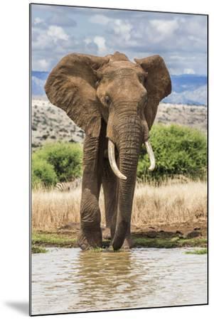 Kenya, Meru County, Lewa Conservancy. a Bull Elephant at a Waterhole.-Nigel Pavitt-Mounted Photographic Print