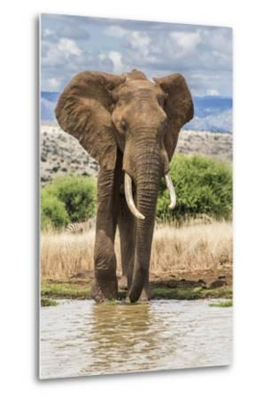 Kenya, Meru County, Lewa Conservancy. a Bull Elephant at a Waterhole.-Nigel Pavitt-Metal Print