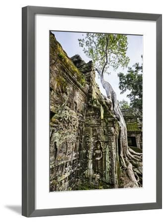 Cambodia, Ta Prohm, Siem Reap Province. the Ruins of the Buddhist Temple of Ta Prohm-Nigel Pavitt-Framed Photographic Print