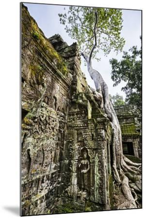 Cambodia, Ta Prohm, Siem Reap Province. the Ruins of the Buddhist Temple of Ta Prohm-Nigel Pavitt-Mounted Photographic Print