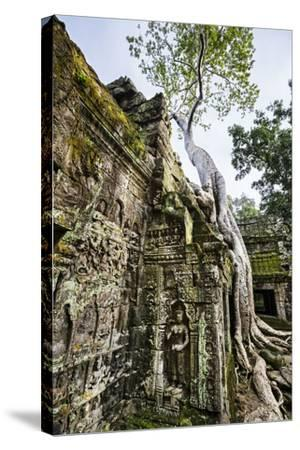 Cambodia, Ta Prohm, Siem Reap Province. the Ruins of the Buddhist Temple of Ta Prohm-Nigel Pavitt-Stretched Canvas Print