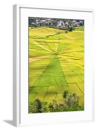 Indonesia, Flores Island, Cancar. the Attractive Spider S Web Rice Paddies Near Ruteng.-Nigel Pavitt-Framed Photographic Print