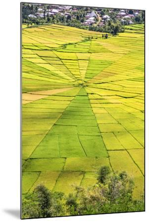 Indonesia, Flores Island, Cancar. the Attractive Spider S Web Rice Paddies Near Ruteng.-Nigel Pavitt-Mounted Photographic Print