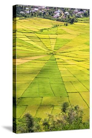 Indonesia, Flores Island, Cancar. the Attractive Spider S Web Rice Paddies Near Ruteng.-Nigel Pavitt-Stretched Canvas Print