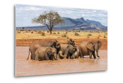 Kenya, Taita-Taveta County-Nigel Pavitt-Metal Print