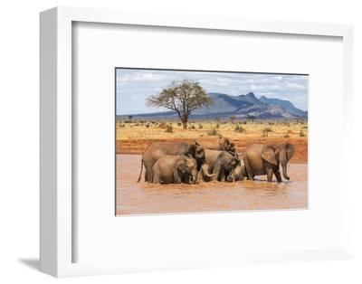 Kenya, Taita-Taveta County-Nigel Pavitt-Framed Photographic Print