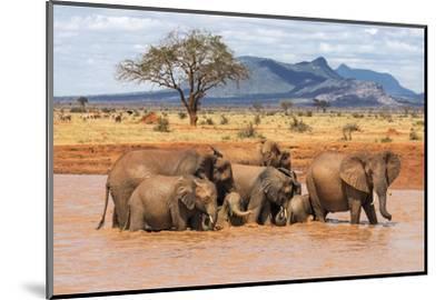 Kenya, Taita-Taveta County-Nigel Pavitt-Mounted Photographic Print