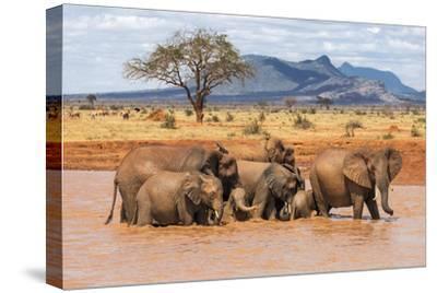 Kenya, Taita-Taveta County-Nigel Pavitt-Stretched Canvas Print