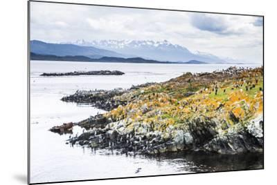 Cormorant Colony on an Island at Ushuaia in the Beagle Channel (Beagle Strait), Argentina-Matthew Williams-Ellis-Mounted Photographic Print