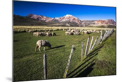 Sheep on the Farm at Estancia La Oriental, Argentina-Matthew Williams-Ellis-Mounted Photographic Print