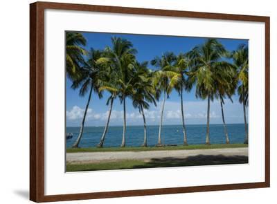Palm Tree Line, Royal Island, Iles Du Salut, Devils Island, French Guiana, Department of France-Michael Runkel-Framed Photographic Print