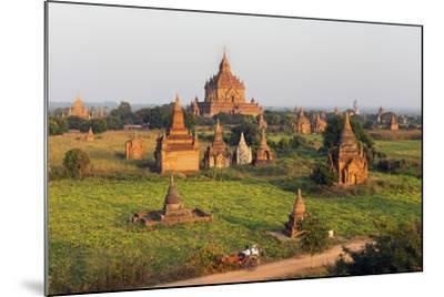 Traditional Horse and Cart Passing the Pagodas in Bagan (Pagan), Myanmar (Burma), Asia-Jordan Banks-Mounted Photographic Print
