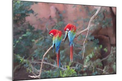 Red-And-Green Macaws (Ara Chloropterus) Perched on a Branch in Buraco Das Araras, Brazil-G&M Therin-Weise-Mounted Photographic Print