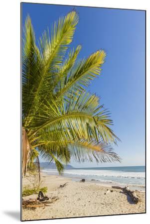 Palm Trees on This Beautiful Surf Beach Near Mal Pais, Santa Teresa, Costa Rica-Rob Francis-Mounted Photographic Print