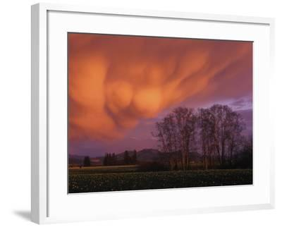 Mammatus Clouds in the Evening Light, Skagit Valley, Washington--Framed Photographic Print