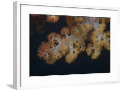 Close-Up of Tree Coral on a Fijian Reef-Stocktrek Images-Framed Photographic Print