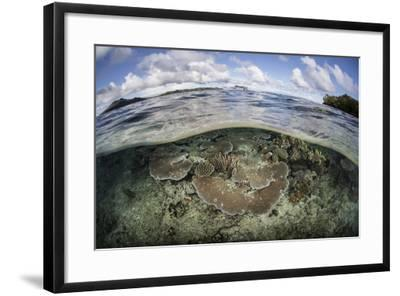 A Healthy Coral Reef Grows in the Solomon Islands-Stocktrek Images-Framed Photographic Print