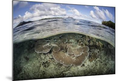A Healthy Coral Reef Grows in the Solomon Islands-Stocktrek Images-Mounted Photographic Print