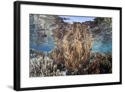A Healthy and Diverse Coral Reef Grows in Raja Ampat, Indonesia-Stocktrek Images-Framed Photographic Print