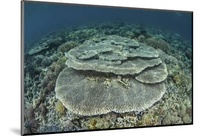 Corals Grow on a Shallow Reef in Indonesia-Stocktrek Images-Mounted Photographic Print