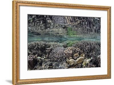 Fragile Corals Grow in Shallow Water in Komodo National Park-Stocktrek Images-Framed Photographic Print