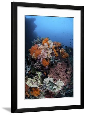 Soft Corals, Sponges, and Other Invertebrates on a Reef in Indonesia-Stocktrek Images-Framed Photographic Print